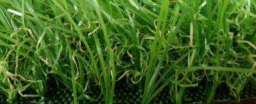 Изображение синтетического газона зеленого цвета с размером ворса 40 мм