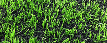 Изображение зеленого монофиламентного заменителя натурального газона с длиной ворса 60 мм